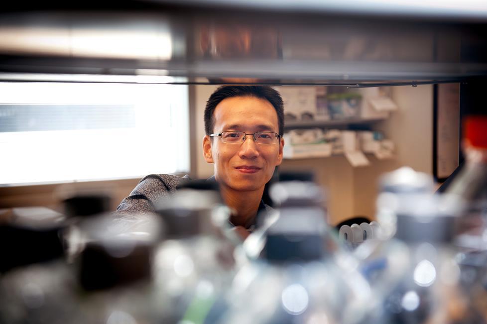 BE Seminar – Ke Cheng, Ph.D., Distinguished Professor at UNC/NCSU